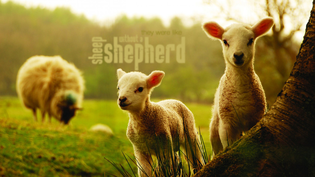 sheep-out-shepherd-christian_680785